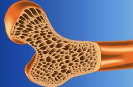 دانلود تحقیق بافت استخوانی